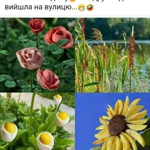 2593318_1623263888.jpg