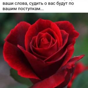 2593318_1624980948.jpg