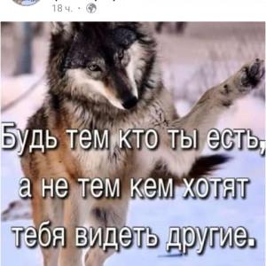 2593318_1626019732.jpg