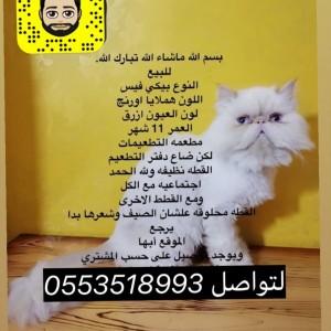 330600_1558029175.jpg